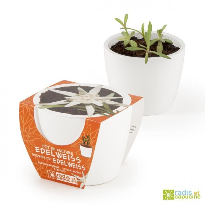 JARDINIÈRE - BAC A FLEUR Pot céramique blanc 8 cm Edelweiss 0,000000 Fleur