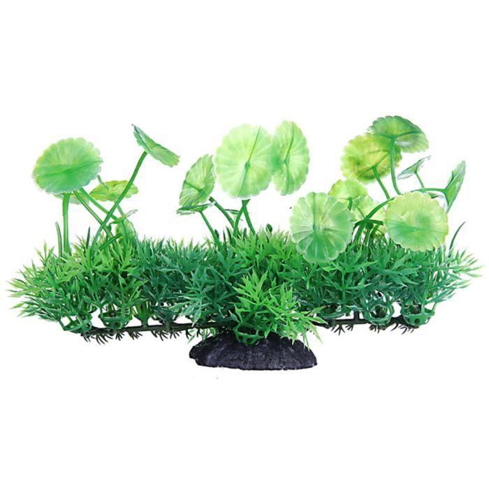 plante aquatique haute