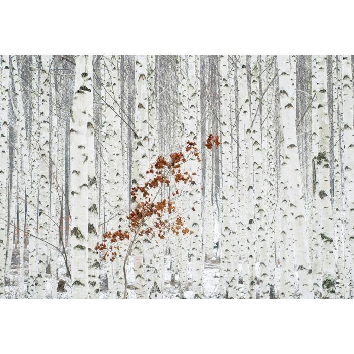 Papier Peint Photo Foret De Bouleaux Blancs 368x254cm Achat