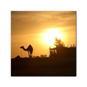 TABLEAU - TOILE Impression sur toile - chameau en Egypte 80 x 80 c