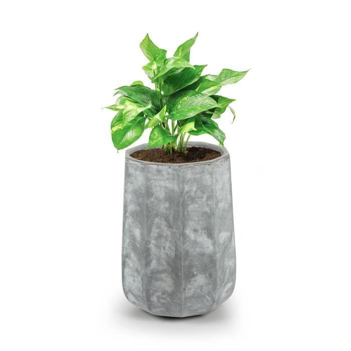 blumfeldt decaflor bac fleurs ou plantes jardinire pour intrieur ou extrieur 40 x 50 x 40 cm fibre de verre gris clair