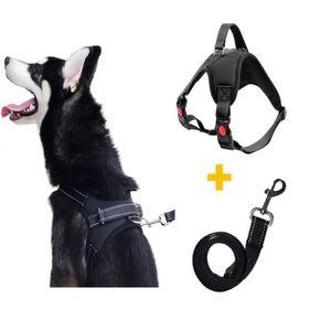 HARNAIS ANIMAL Harnais et harnais de chien de harnais de chien au