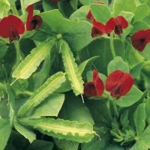graines de fleurs achat vente graines de fleurs pas cher cdiscount page 61. Black Bedroom Furniture Sets. Home Design Ideas