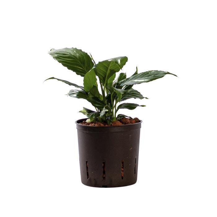 HYDROPONIQUE - NFT BOTANICLY culture hydroponique   Plantes d'intérie