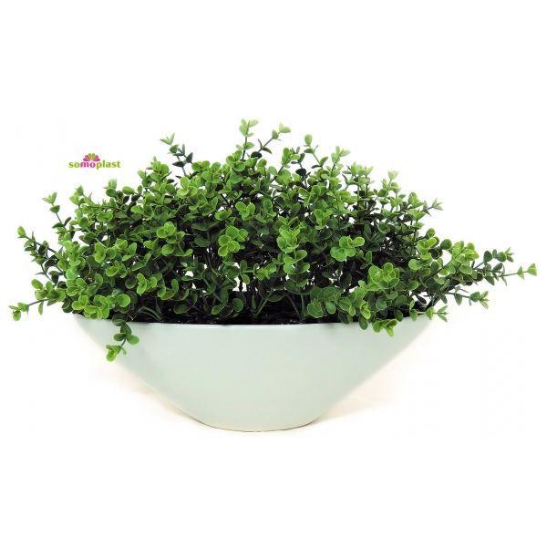 composition plantes grasses intrieur plantes grasses et succulentes verreries terrarium. Black Bedroom Furniture Sets. Home Design Ideas