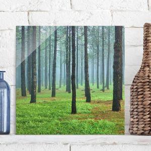 CADRE PHOTO 50x50 cm photo en verre - forêt profonde de pins s