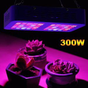 HYDROPONIQUE - NFT 300W LED système hydroponique de serre chaude de s