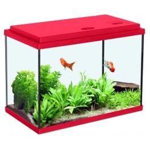 Aquarium pour poisson rouge achat vente aquarium pour for Acoiriome de poisson
