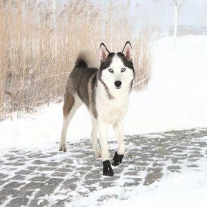TRIXIE Bottes de protection Walker Active 2 pi?ces L - Noir - Pour chien