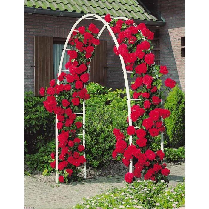 rosier grimpant 39 musimara 39 achat vente plante pouss e rosier grimpant 39 musimara 39 cdiscount. Black Bedroom Furniture Sets. Home Design Ideas