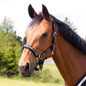 LONGE - LICOL HORZE Licol Hamptons pour chevaux avec bouclerie a