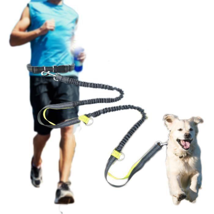 Laisse chien corde ceinture laisse jogging sangle - Laisse corde gros chien ...