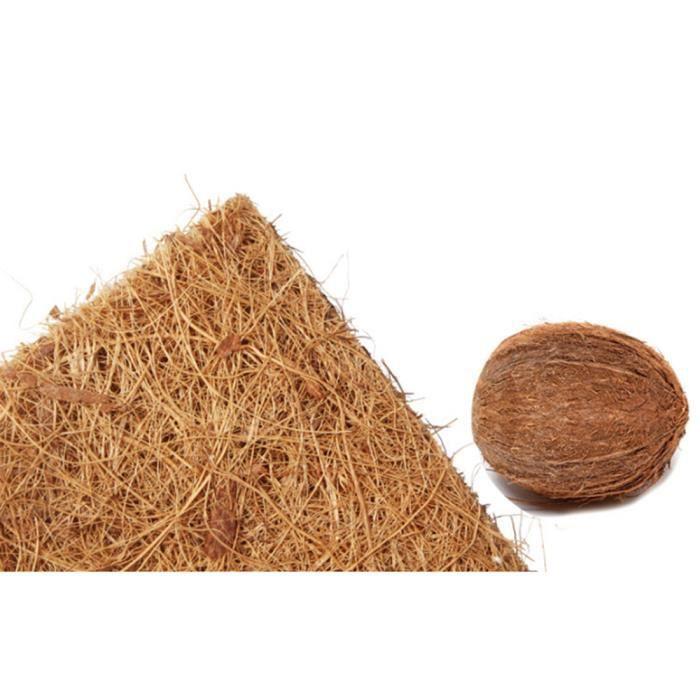 noix de coco sculptees dans la fibre. Black Bedroom Furniture Sets. Home Design Ideas