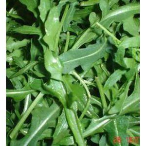 GRAINE - SEMENCE Corée Chaud Nutrition Roquette Bonsais Légumes 20
