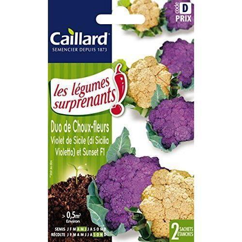 Caillard Pfcc16528 Graines De Duo Chou Fleur Violet Sicile Sunset F1
