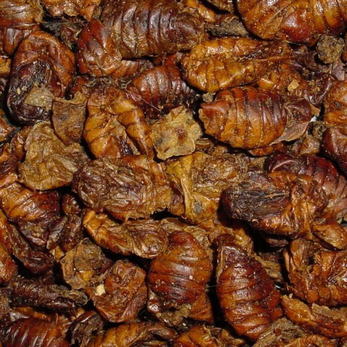 Aliment pour carpe koi achat vente aliment pour carpe for Nourriture du poisson