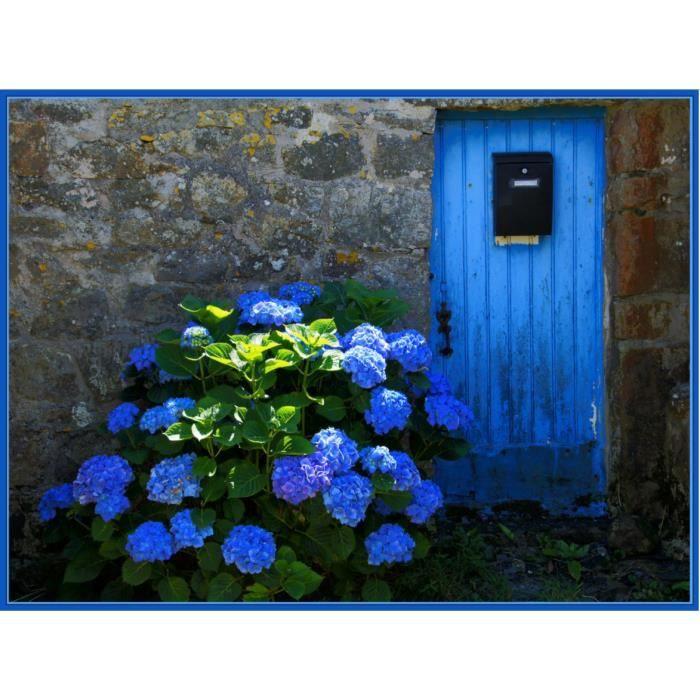 Sachet de 10 graines semer d 39 hortensia bleu hydrangea - Terre pour hortensia bleu ...