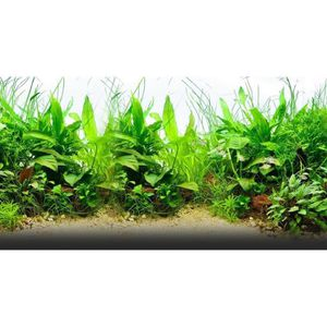 POMPE À EAU 250 graines mix plantes pour aquarium décor