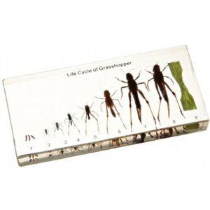 BLOC NOTE Bloc acrylique cycle de vie d'affichage: Grasshopp