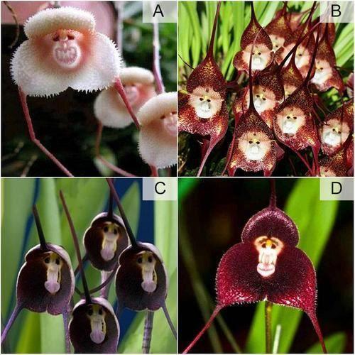 Graine d\'orchidée-bonsaï de jardin rares 30 PCS #2 - Achat / Vente ...