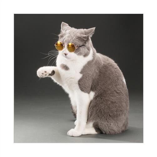 chiens les de de et pour les taille petite Lunettes chats noire lentille protection x6BqYwI