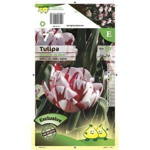 BULBE Bulbe Tulipe Double Tardive Carnaval de Nice X5