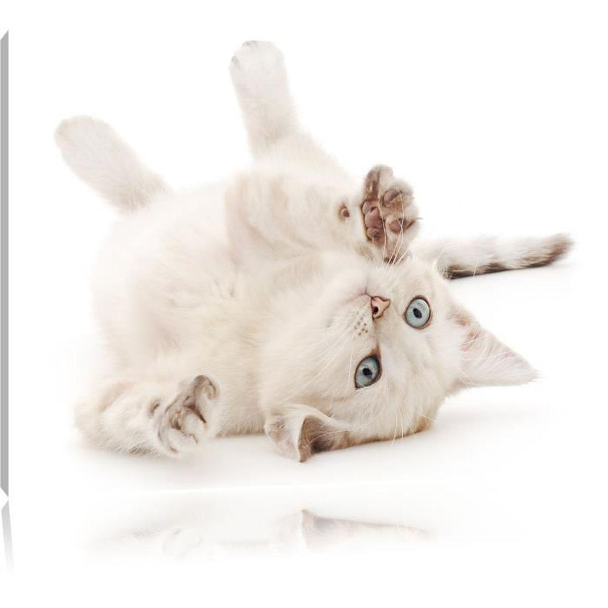 TABLEAU - TOILE Toile imprimé chaton, complètement encadrées avec