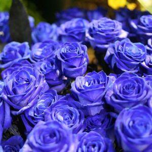 Rose Noir Achat Vente Pas Cher