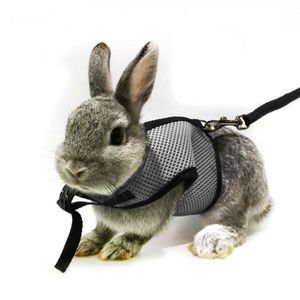 HARNAIS ANIMAL Adjustable Soft Harness With Stretchy Leash For Bu