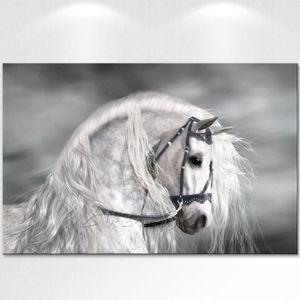 TABLEAU - TOILE Tableau Déco - Toile HD Imprimer Animal Cheval Pei