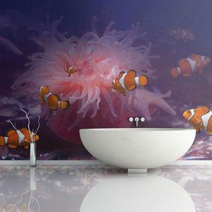 PAPIER PEINT Papier peint - Tropical fishes - 350x270