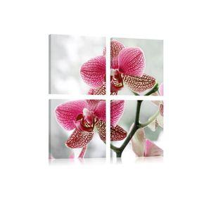 TABLEAU - TOILE Tableau Orchidée De Fantaisie - Dimension - 40x40.
