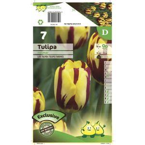BULBE Bulbe Tulipe Simple Tardive Helmar X7