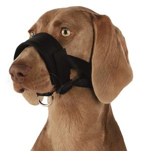 TRIXIE Museli?re sangle nylon - XL - Pour chien