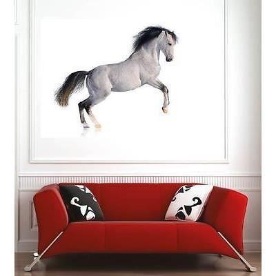 Affiche poster décoration murale Cheval réf 49062826 (6 dimensions ...