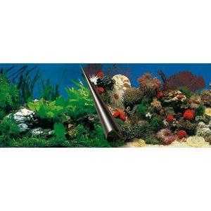 Poster aquarium achat vente poster aquarium pas cher for Aquarium petit prix