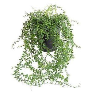Pot de fleur souple achat vente pot de fleur souple - Plante a suspendre exterieur ...