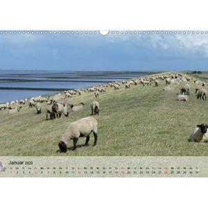 CALENDRIER - EPHEMERIDE compter facilement g a3 transversalement mouton ca
