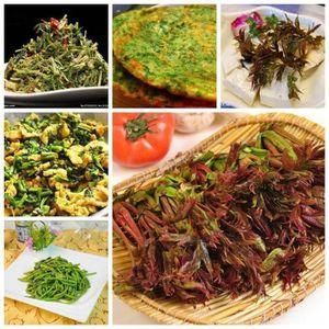 GRAINE - SEMENCE SHAN 40Pcs Graines de légumes de jardins Toona Sin