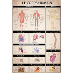 AFFICHE - POSTER Posters XXL Le Corps Humain - Anatomie Muscles Os