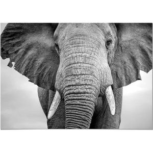 TABLEAU - TOILE Panorama® Tableau Éléphant 50x35cm - Imprimée sur
