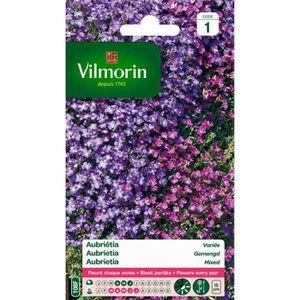 GRAINE - SEMENCE VILMORIN Aubrietia varié