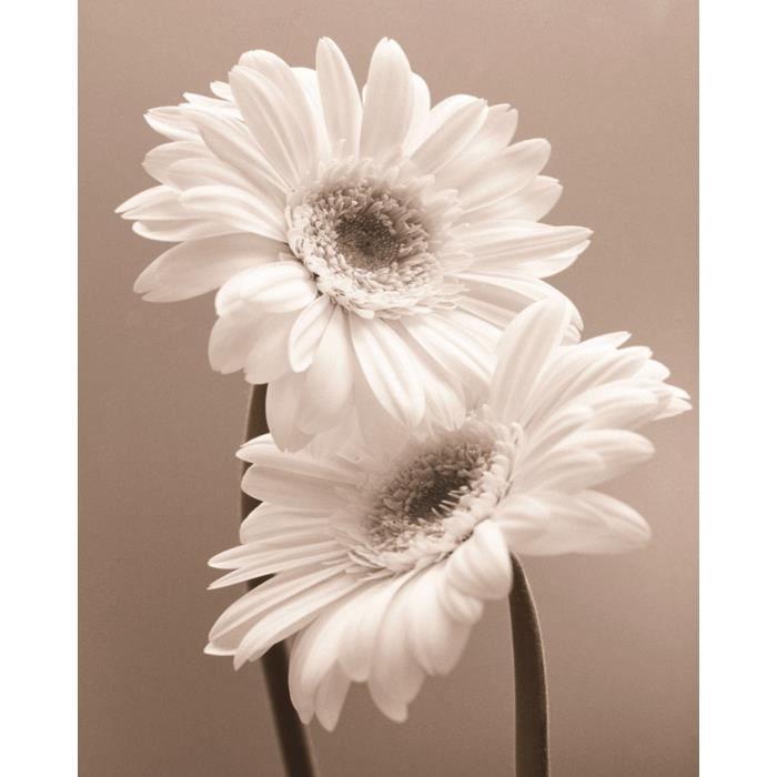 Affiche papier two daisies butler 40x50 cm