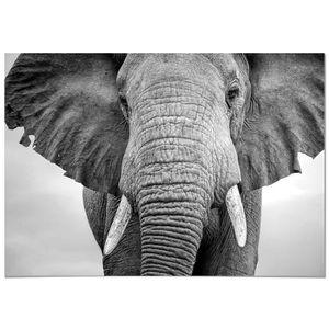 TABLEAU - TOILE Panorama® Tableau Éléphant 70x50cm - Imprimée sur