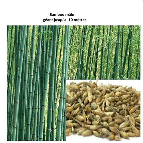 bambou jardinire imgp jpg bambou jardinire que faire avec des bambous trouvailles exotiques. Black Bedroom Furniture Sets. Home Design Ideas
