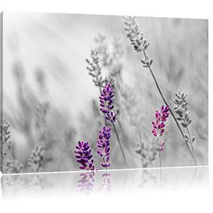 TABLEAU - TOILE Toile imprimé belle lavande noir / blanc, complète