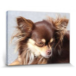 84f7eaa5dd24c Tableau toile animaux - Achat   Vente Tableau toile animaux pas cher ...