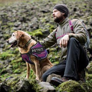 HARNAIS ANIMAL NZBA2 harnais pour animaux de compagnie harnais ré