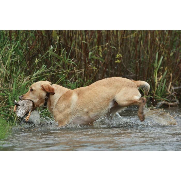 SPORTDOG Collier de dressage 450 m - Pour chien