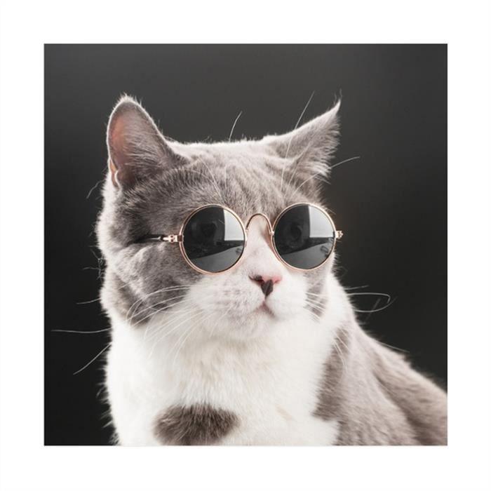 Lunettes de protection pour les chiens et les chats de petite taille, lentille noire